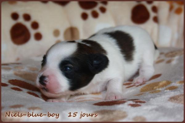 Niels blue boy 15 jours 4