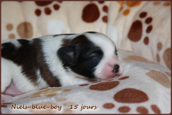 Niels blue boy 15 jours 5