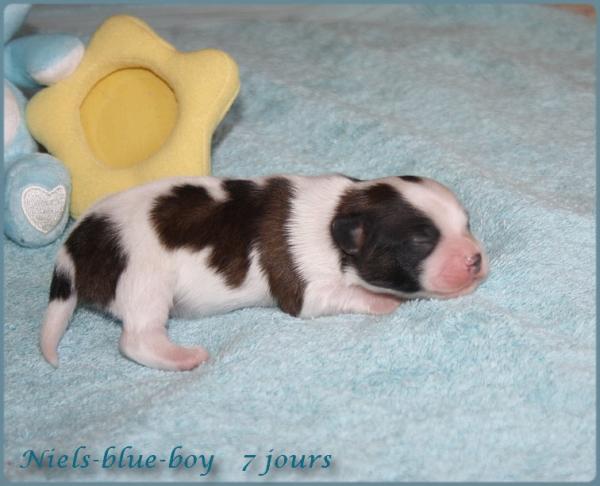 Niels blue boy 7 jours 3