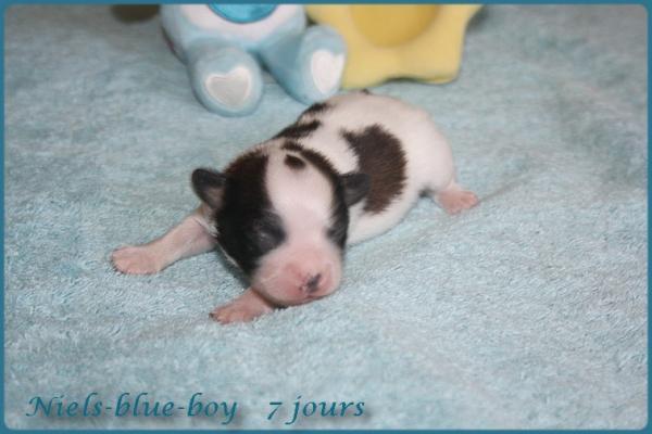 Niels blue boy 7 jours 5