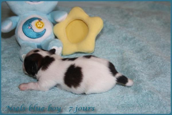 Niels blue boy 7 jours 7