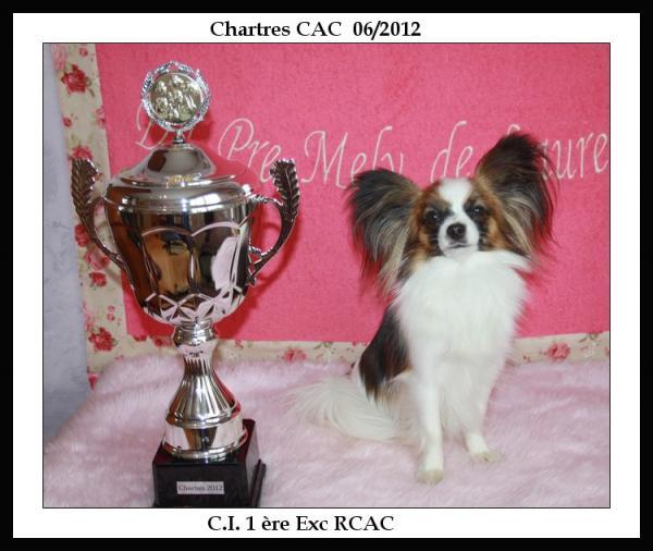 noisette-chartres-06-2012-1.jpg