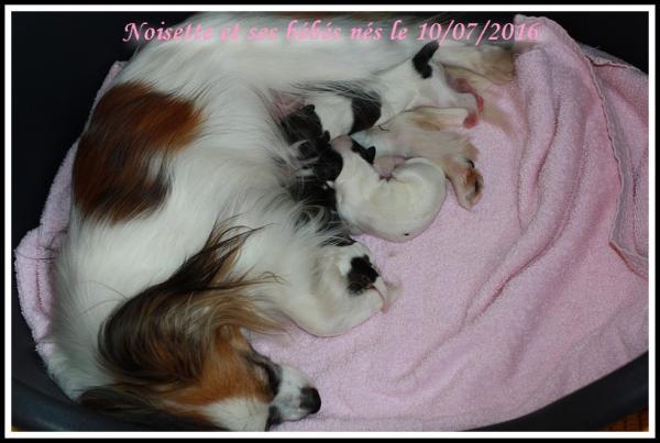 Noisette et ses bebes 07 2016 1