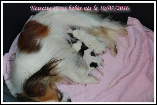 Noisette et ses bebes 07 2016 2