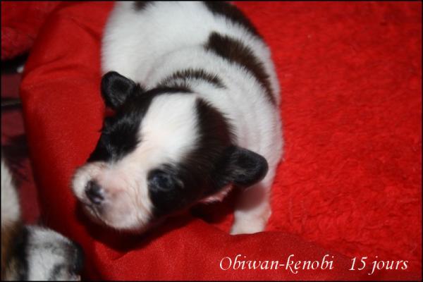 Obiwan kenobi 15 jours 5
