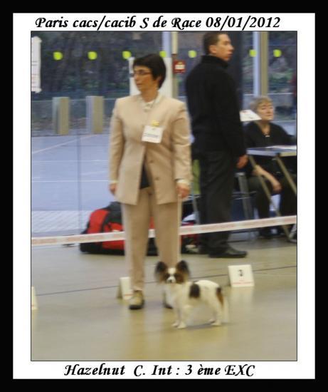 paris-dog-show-08-01-2012-noisette-2.jpg