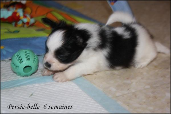 Persee belle 6 semaines 3