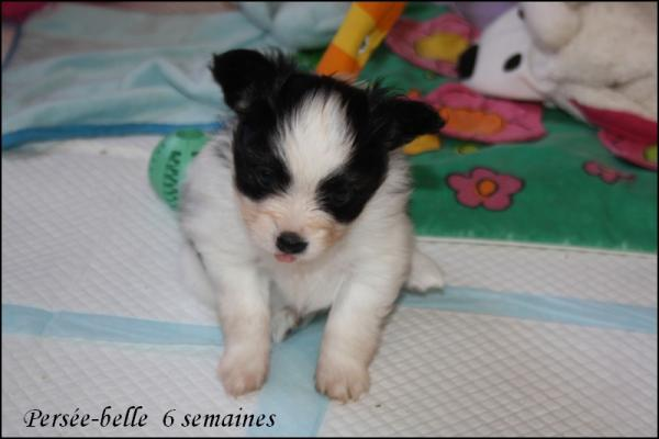 Persee belle 6 semaines