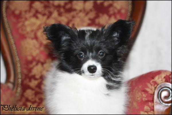 Phelicia 3 mois 4