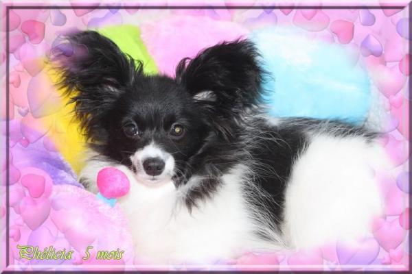Phelicia 5 mois 1