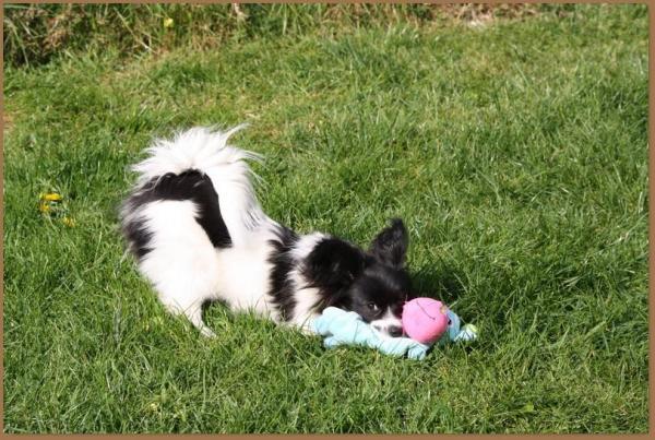 Phelicia 6 mois 6