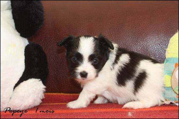 Popeye 1 mois 4