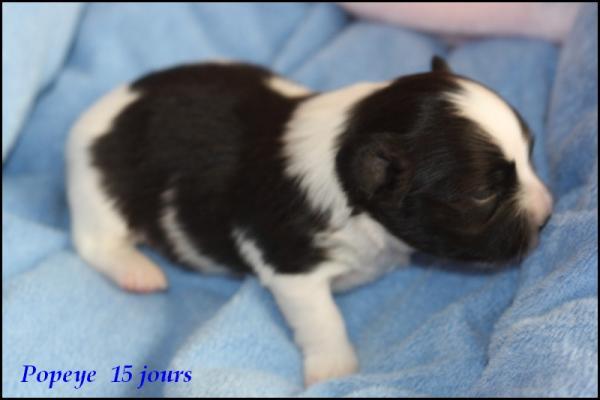Popeye 15 jours 2