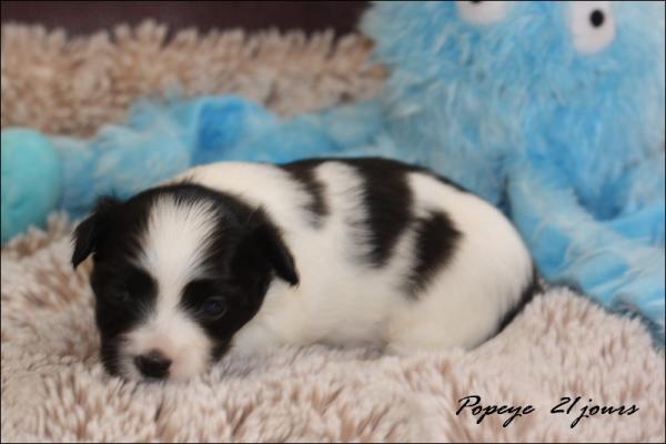 Popeye 21 jours 1
