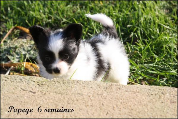 Popeye 6 semaines 1