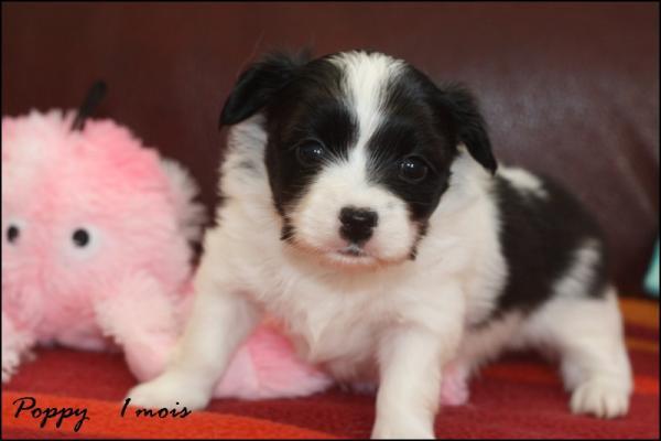 Poppy 1 mois 4