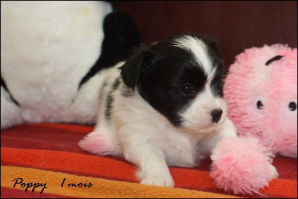 Poppy 1 mois 6