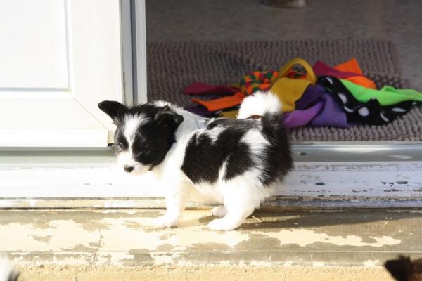 Poppy 6 semaines 3