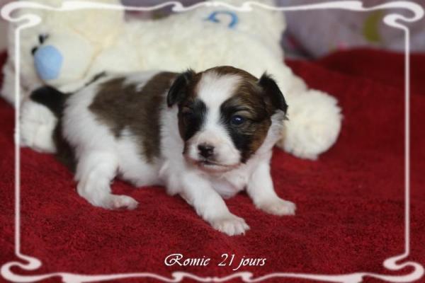 Romie 21 jours 4