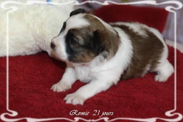 Romie 21 jours 5