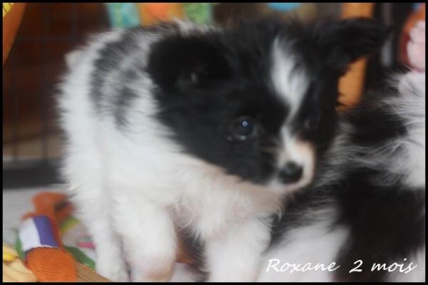Roxane 2 mois 2