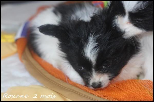 Roxane 2 mois 7