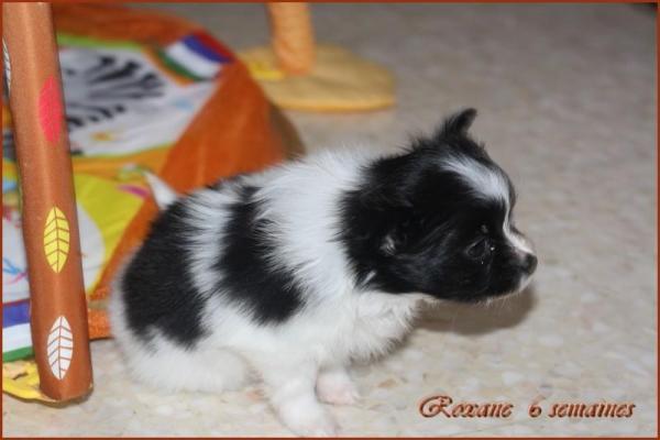 Roxane 6 semaines 3