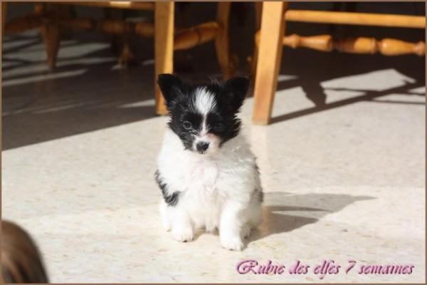 Rubie 7 semaines 5