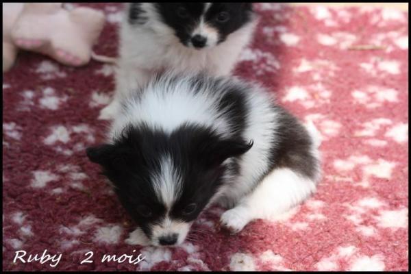 Ruby 2 mois 3