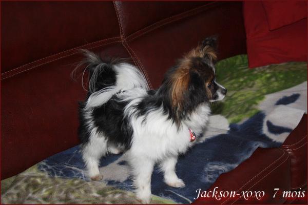 Visite de jackson et iouky 1