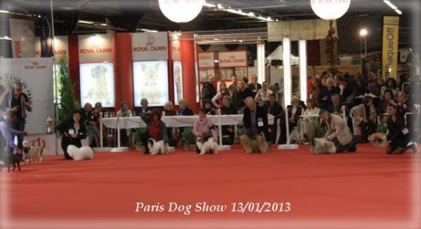 x-mystix-paris-dog-show-01-2013-13.jpg