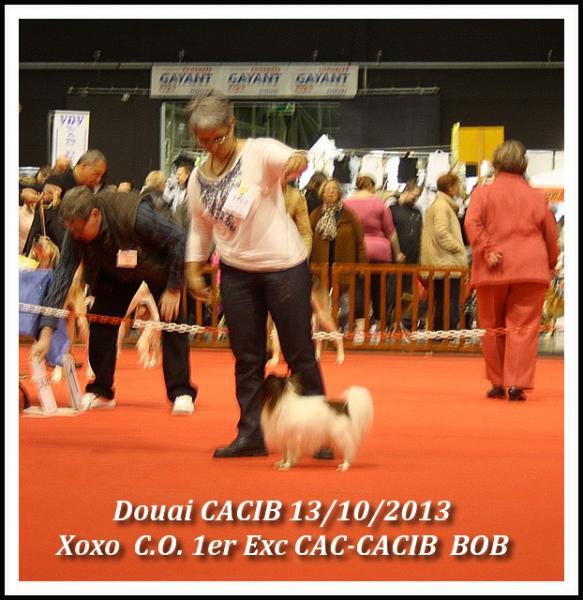 xoxo-douai-cacib-10-2013-1.jpg