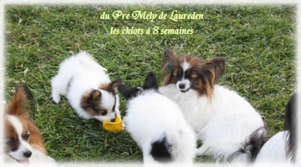 xoxo-et-les-chiots-a-8-sems-5.jpg