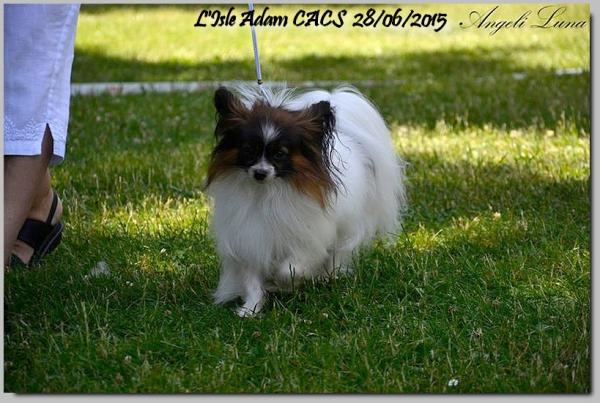 Xoxo isle adam cacs 28 06 2015 4