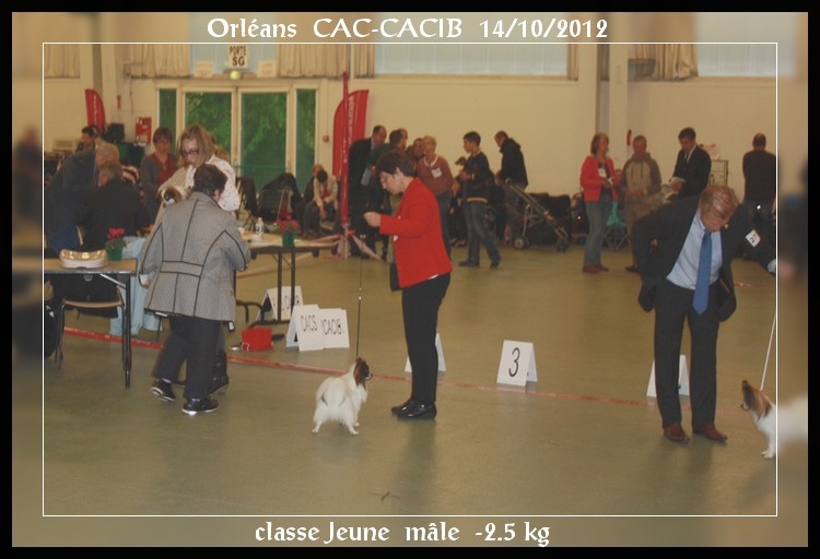 xoxo-orleans-cacib-14-10-2012-1.jpg