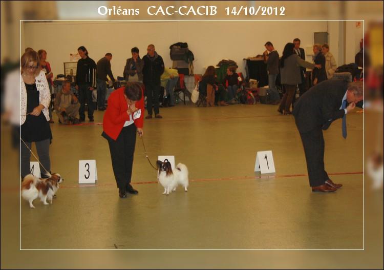 xoxo-orleans-cacib-14-10-2012-4.jpg