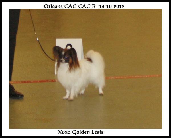 xoxo-orleans-cacib-14-10-2012-9.jpg