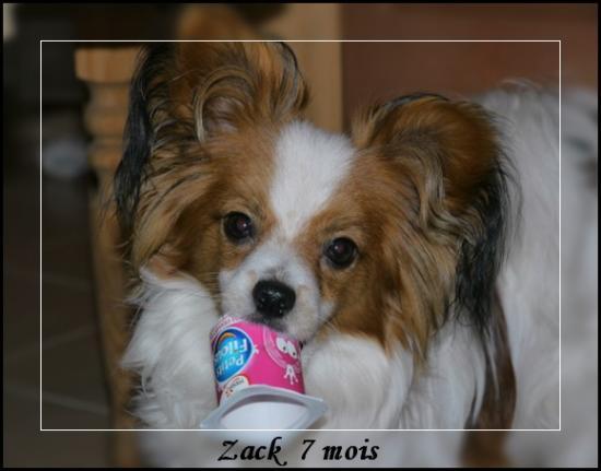 zack7-mois-2.jpg