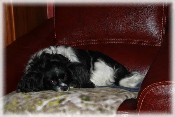 betsy le 06-11-2011