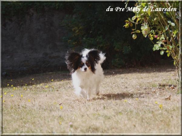 élody mon rêve 09-2012 1