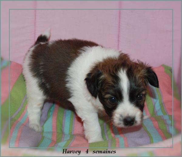 harvey 4 sems 1