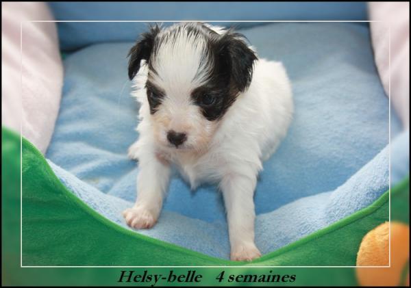 helsy-belle 4 sems 1