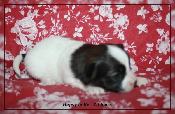 hepsy-belle 15 jrs 2