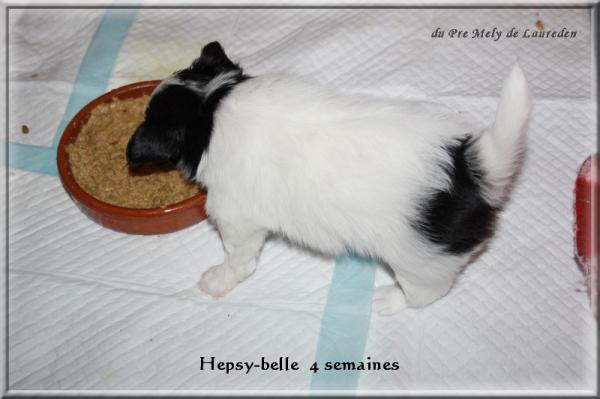 hepsy-belle 4 sems 1