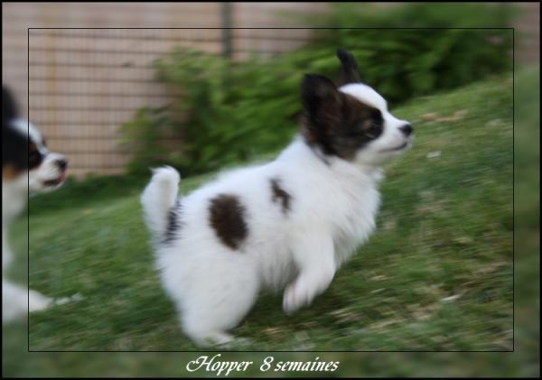 hopper 8 sems 1