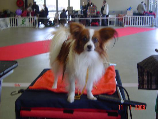 Paris Dog Show 01/09