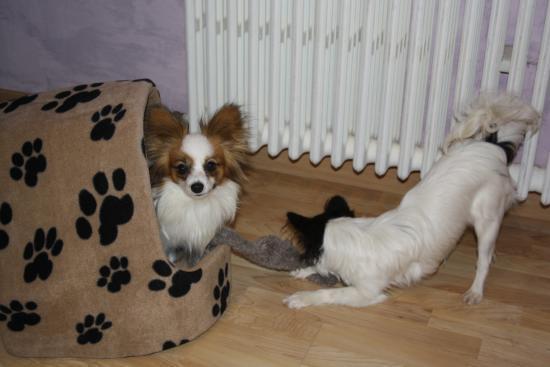 Elody et Mystix Janvier 2010
