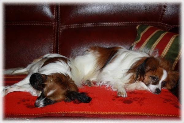 lady et chopin le 06-11-2011