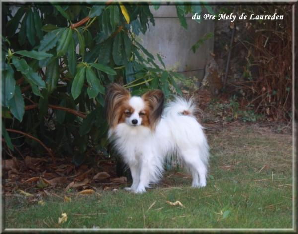 Mes chiens sept 2012 4