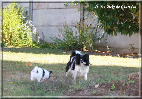 mes chiens sept 2012 6